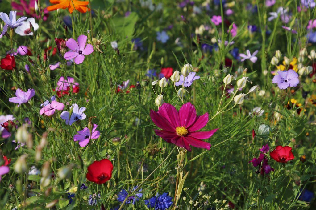 Heb jij een moderne tuin?